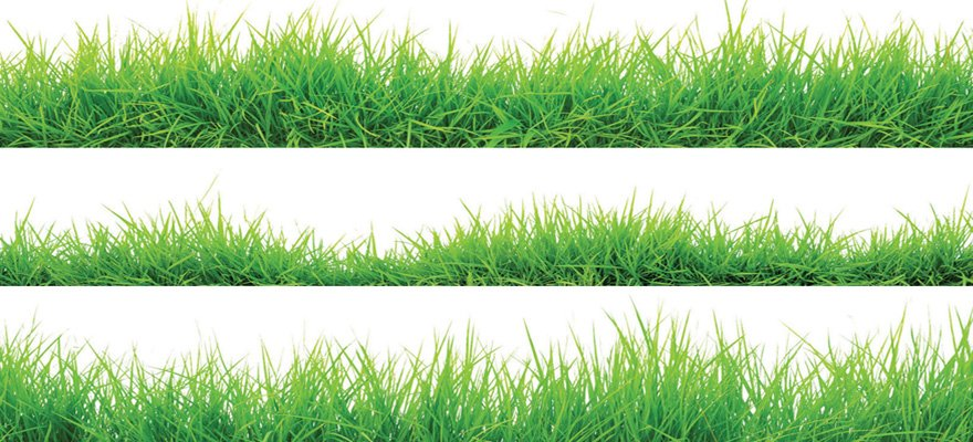 Michael Dean In Search of the Perfect Lawn