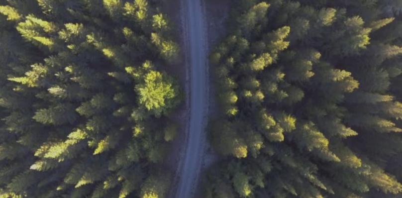 Forest and road from the air, journal of wild culture @2020