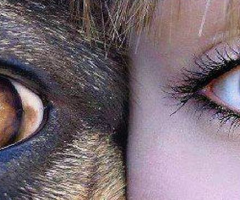 Animal and human eyes, Wild Culture, ©2014