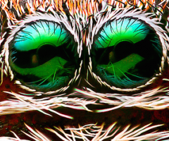 Spider face, Wild Culture, ©2014, Spiders and drugs