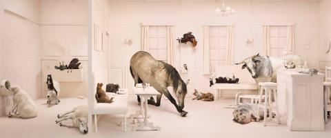 Frieke Janssens, Animalholics