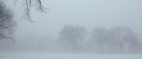 Central Park, Great Hill, in winter, #3, by Whitney Smith ©2014