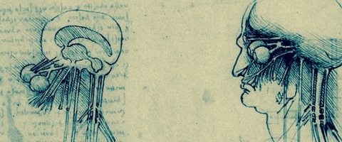 Leonardo Da Vinci's neuroscience drawings, journal of wild culture, ©2019