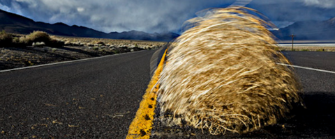 Tumble weed on highway, journal of wild culture, ©2019