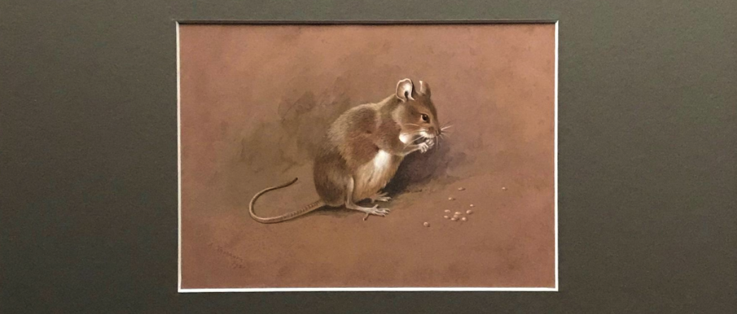 'A Field Mouse', Alexander Thorburn, journal of wild culture ©2021