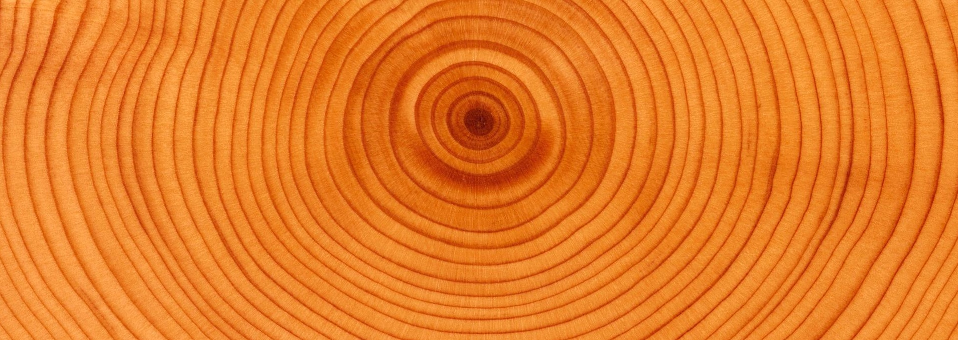 tree-rings, journal of wild culture ©2020