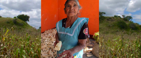 Corn and women in Mexico, journal of wild culture, ©2020